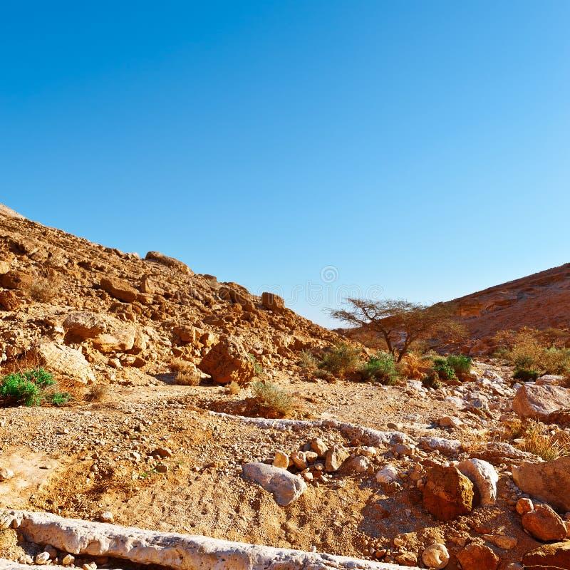 Desierto del Néguev imagen de archivo libre de regalías