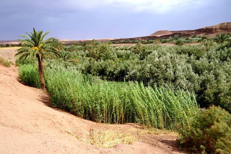 Desierto del oasis en las montañas de atlas en Marruecos foto de archivo