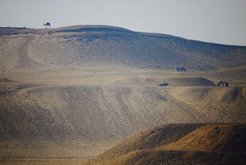Desierto distante del camello solitario foto de archivo
