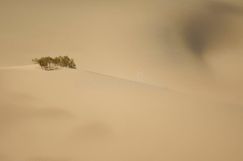 Desierto en Death Valley, CA fotos de archivo
