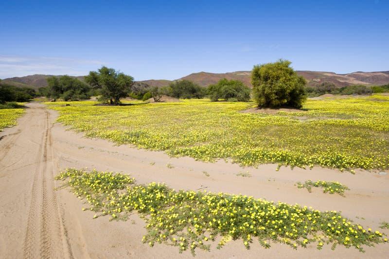 Desierto floreciente en Damaraland, Namibia imagen de archivo