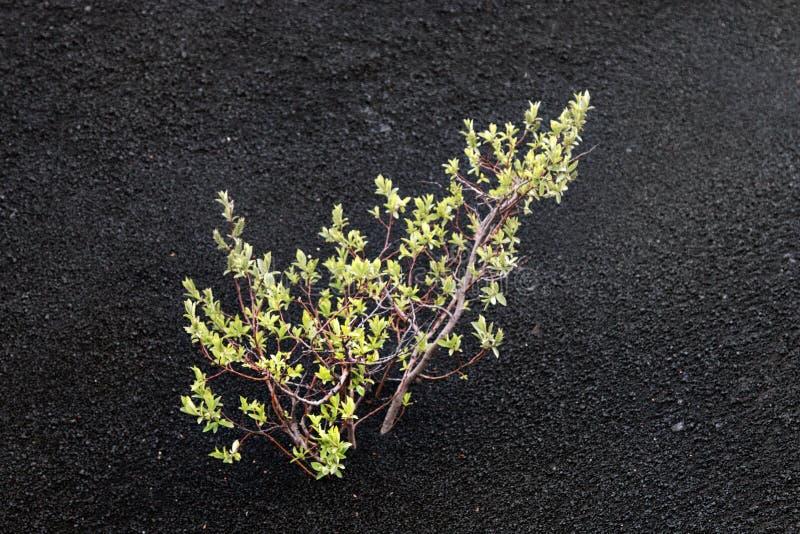 Desierto lleno de grava negro con áreas de la arena gruesa fotografía de archivo libre de regalías