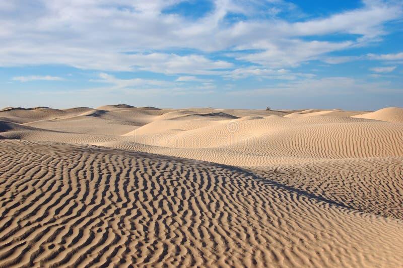 Desierto Sáhara foto de archivo libre de regalías
