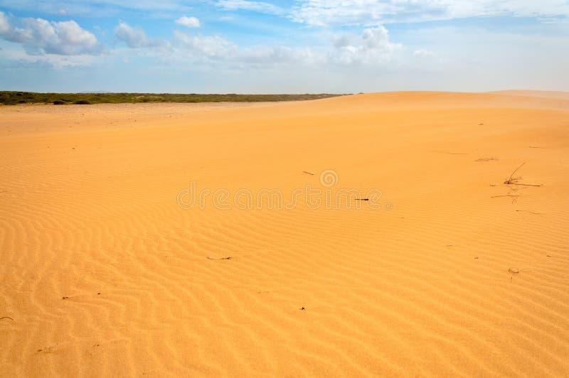 Desierto solitario de Sandy foto de archivo
