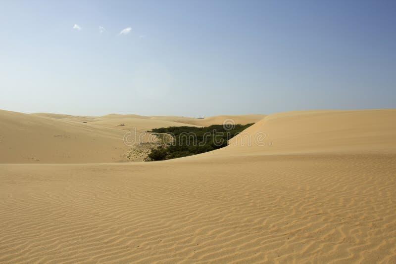 Download Desierto VIII imagen de archivo. Imagen de calor, plantas - 42431257