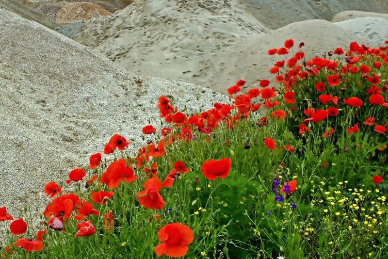 Desierto Y Flores 1 Fotos de archivo