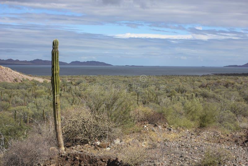 Desierto y mar imágenes de archivo libres de regalías