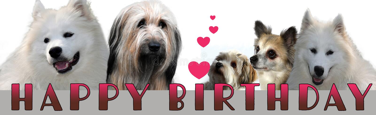 Happy birthday lettering with dogs. Banner design for a congratulation  card with  cute  thoroughbred dogs and the words happy birthday royalty free stock image