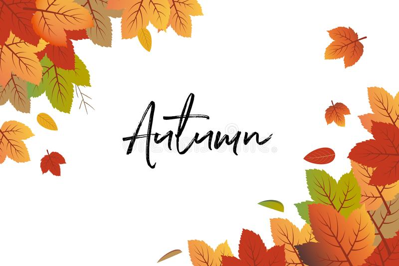 Autumn background vector with fall leaves at top left and bottom right stock illustration