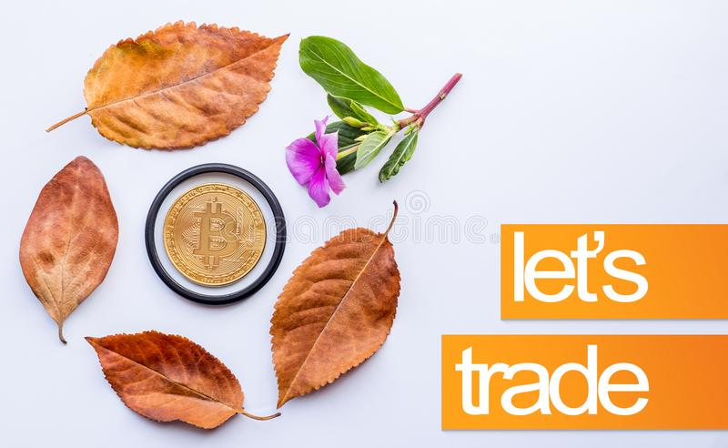 Design elements for autumn. Bitcoin in the center of fallen autumn leaves and Little pink flower royalty free stock photo