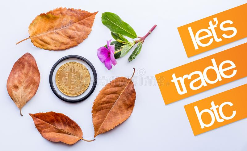 Design elements for autumn. Bitcoin in the center of fallen autumn leaves and Little pink flower royalty free stock images