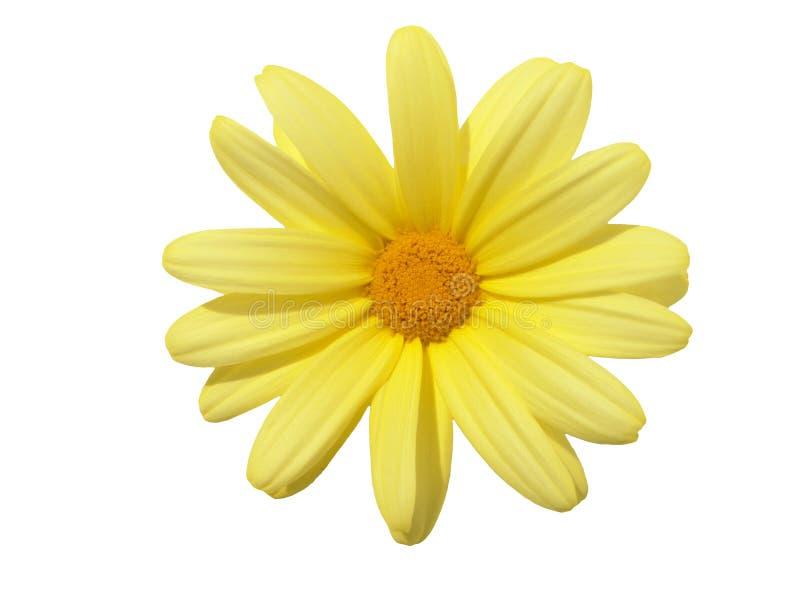 design elements flower head 免版税库存照片