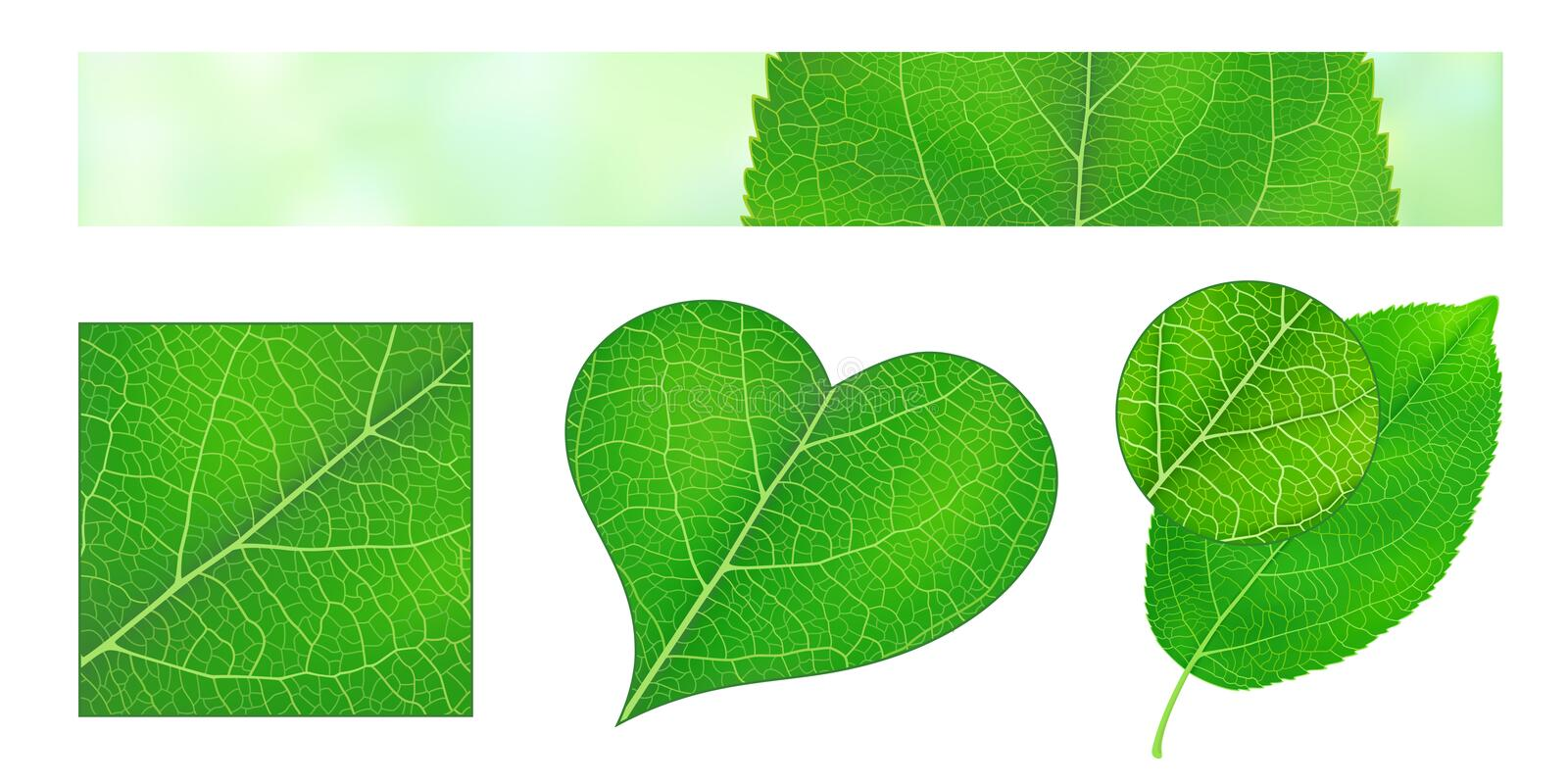 Design elements with green leaf texture stock illustration