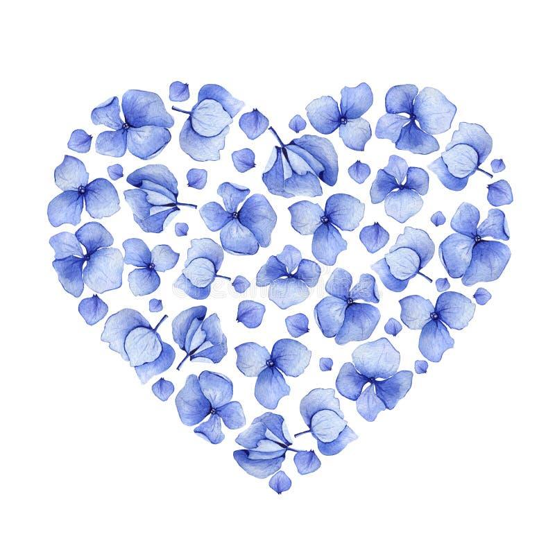 Design för hjärta för blå vattenfärgvanlig hortensia blom- stock illustrationer