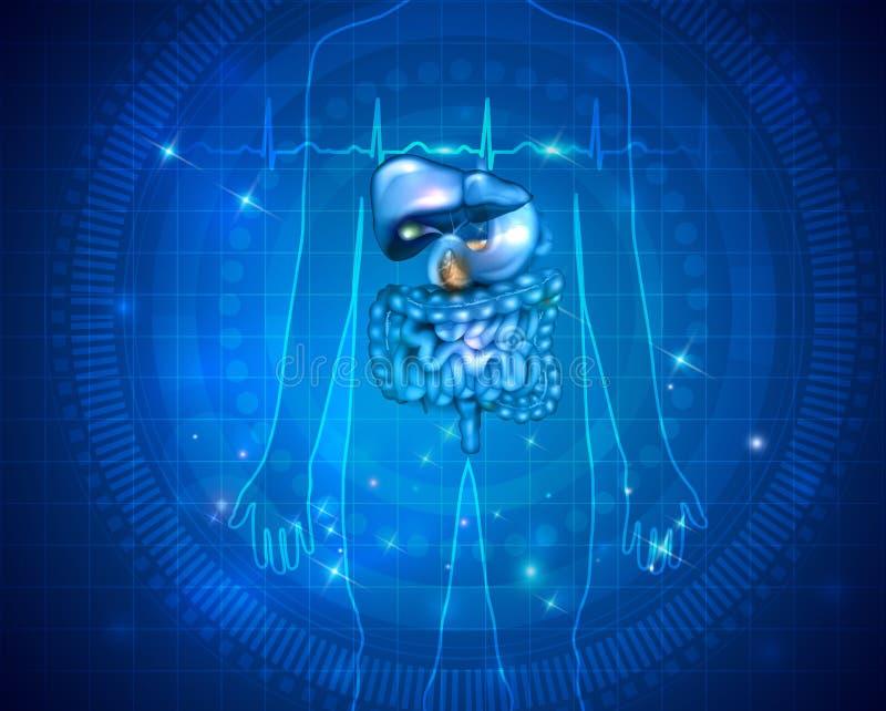 Design för mageorganhälsovård stock illustrationer