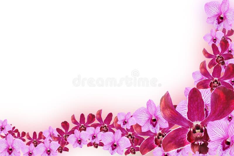 Design för orkidéblommagräns stock illustrationer