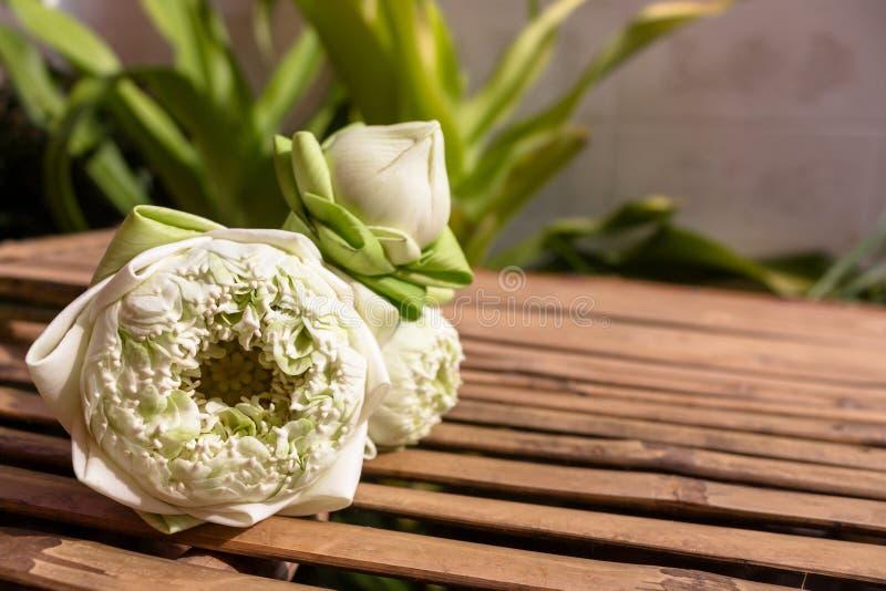 Design för tre gröna knoppar för lotusblommablommor på bambuträtabellen och kopieringsutrymme på växtbakgrund royaltyfri foto