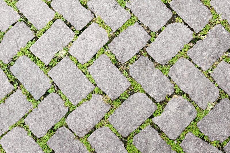 Design för trottoar för textur för grässtengolv royaltyfri foto