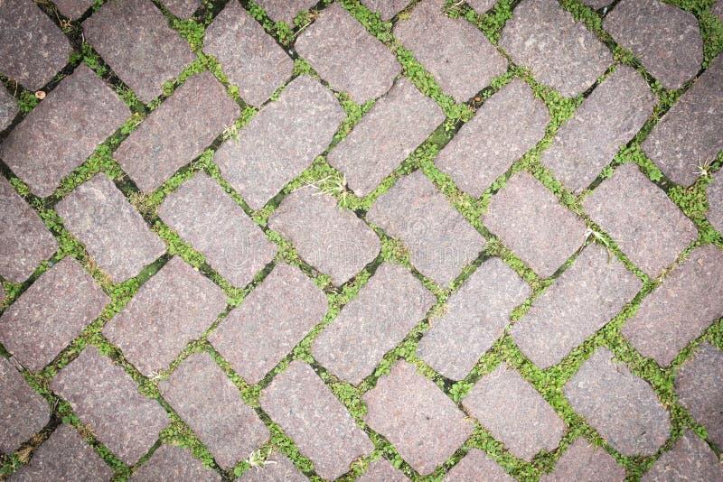 Design för trottoar för textur för grässtengolv arkivfoton