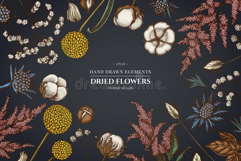Design floral no fundo escuro com astilbe, craspedia, eryngo azul, lagurus, algodão, gypsophila ilustração do vetor