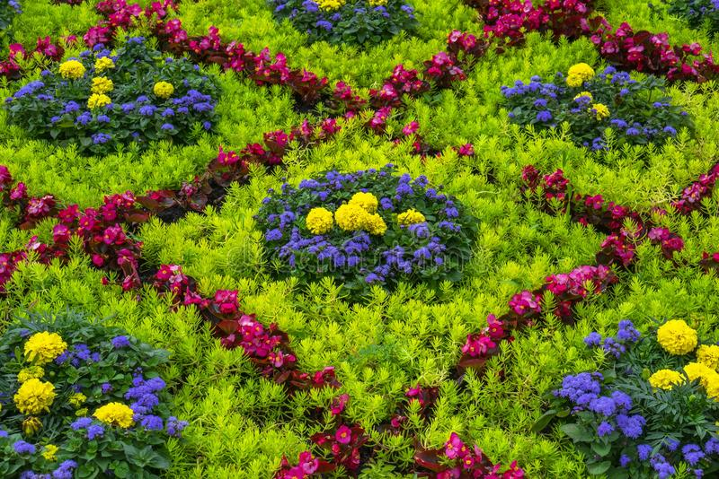 Design of flower bed by diferrent colorfull flowers. Plant pattern texture.  stock photo
