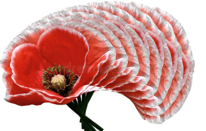 design poppies arkivbilder