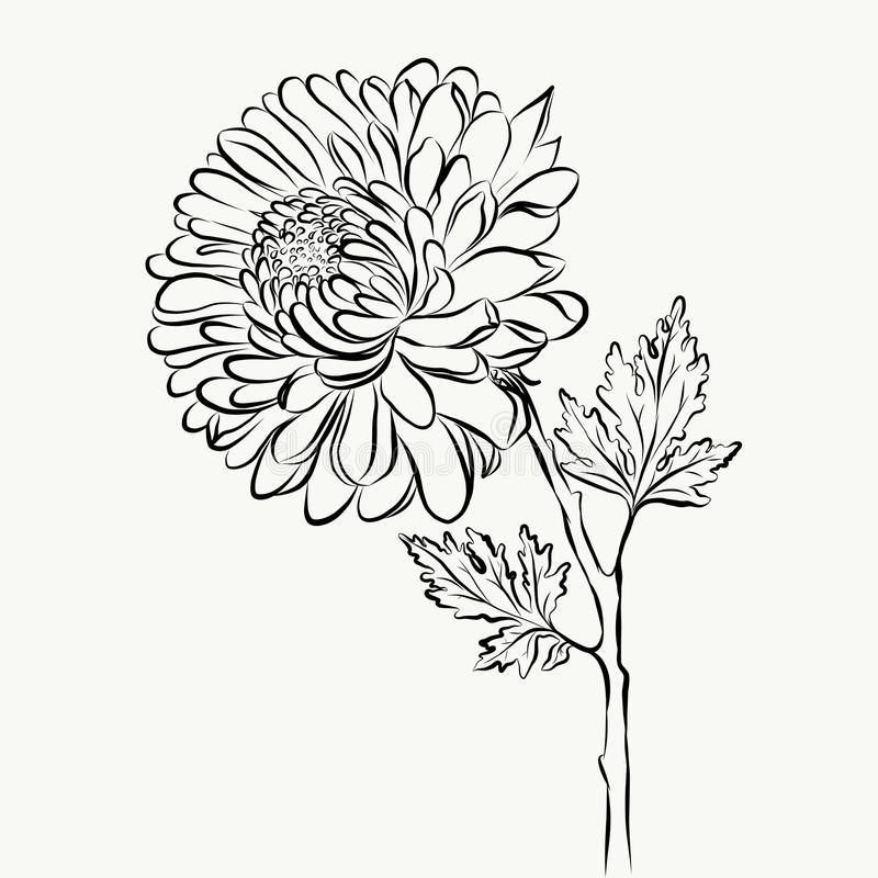 Lovely Isolated big Flower sketch grafical paint stock images