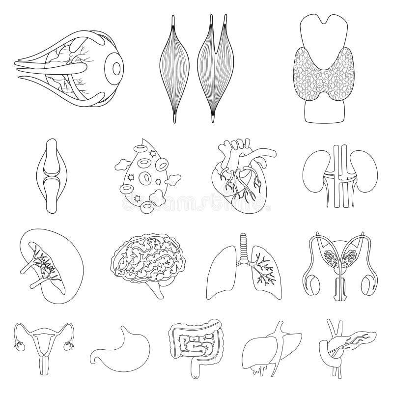 Design vetorial da anatomia e do ícone de órgãos Coleta de anatomia e ícone do vetor médico para estoque ilustração do vetor