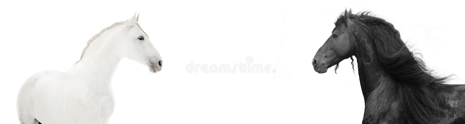 Design of website header with black and white hors royalty free stock photography