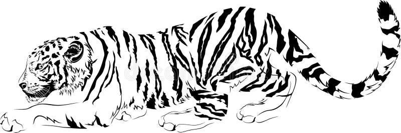 Designe predador preto e branco do tigre dos desenhos do vetor ilustração royalty free