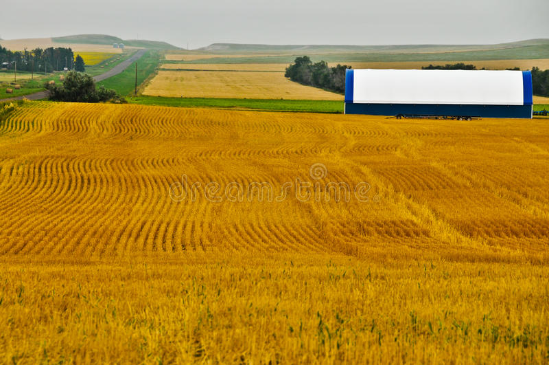 designen fields geometriskt guld- vete arkivbilder