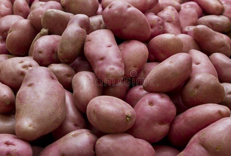 Desiree potatisar royaltyfri foto