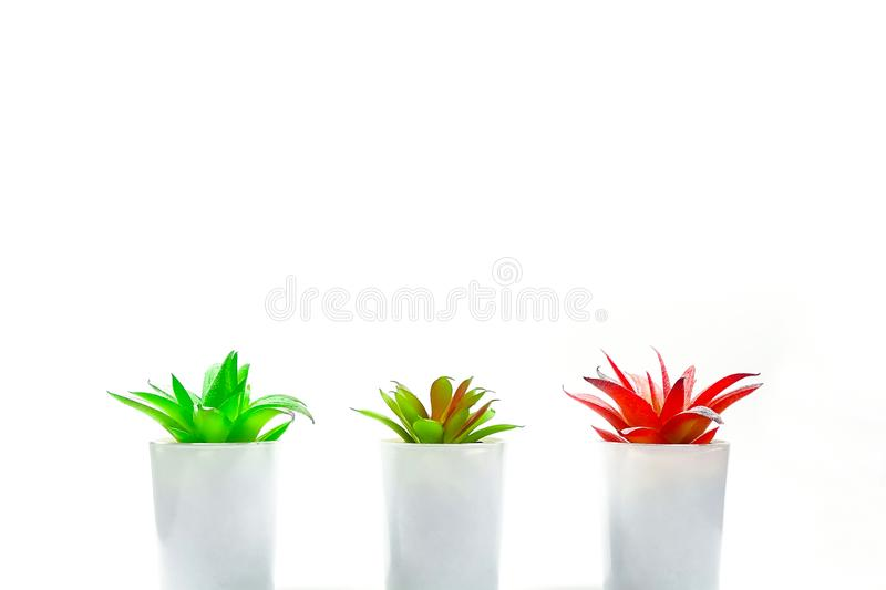Red and green desk plants royalty free stock photography