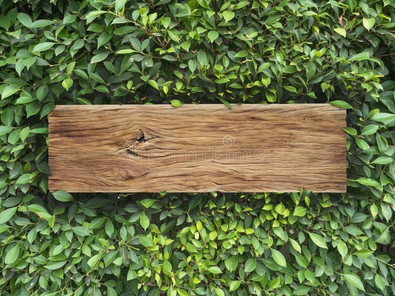 Deski drewno na Koreańskim Banyan drzewie opuszcza tło zdjęcia stock