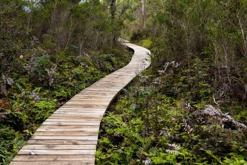 Deskowy spacer w Australijskim lesie zdjęcie royalty free