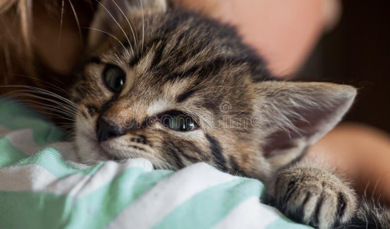 Deslizamento do gatinho no ombro do menino fora imagem de stock royalty free