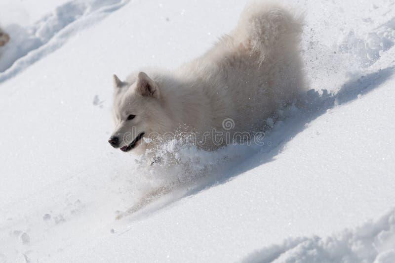 Deslize Downhills Em Uma Neve Imagens de Stock
