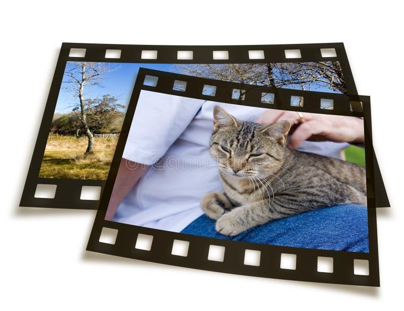 Deslize frames imagem de stock royalty free