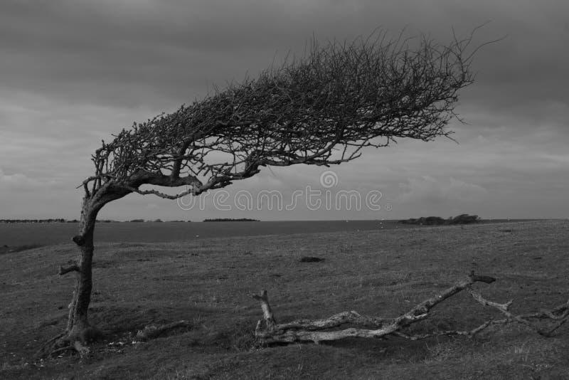 Desolate a árvore imagem de stock royalty free