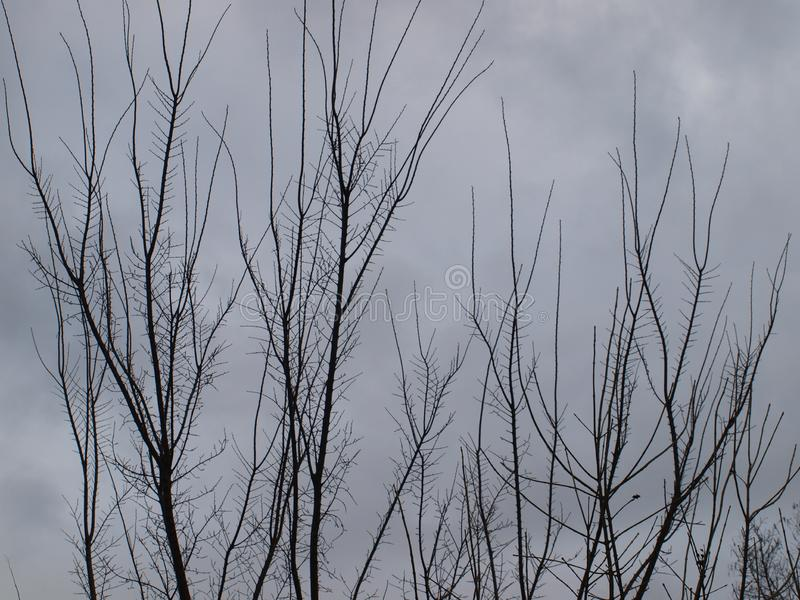Desolately Barren Bleakness of Winter. With winter only a few days old, the bleakness of winter is stark and dreary. Only a few days ago these trees were covered royalty free stock photo
