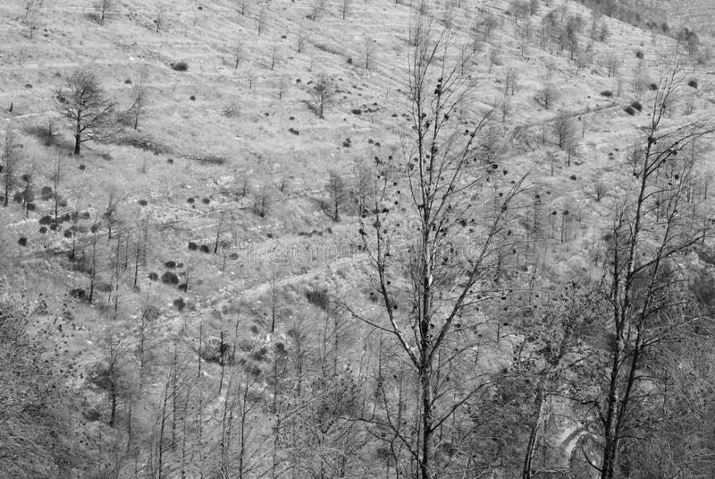 Download Desolation stock image. Image of destroyed, damage, blackened - 18323339