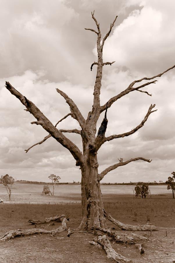 Download Desolation stock photo. Image of landscape, historic, days - 2457124