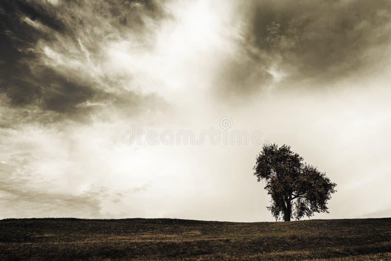 desolation fotografie stock libere da diritti
