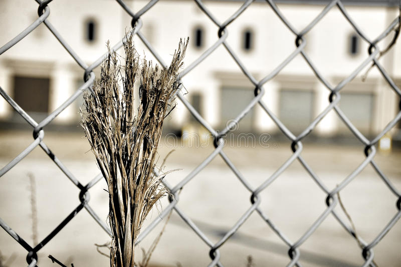 Desolation stock photography