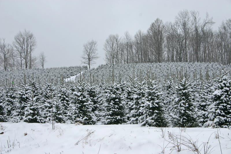 Desorientación del árbol de navidad fotografía de archivo libre de regalías