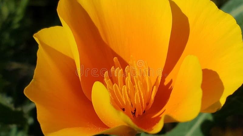 Despe?a a flor imagens de stock