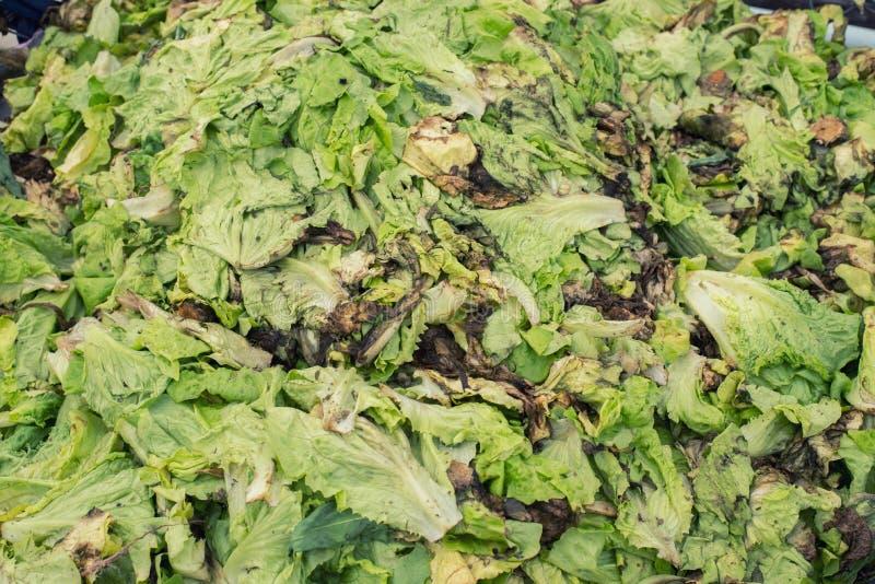 Desperdício da colheita restante da colheita fotografia de stock royalty free