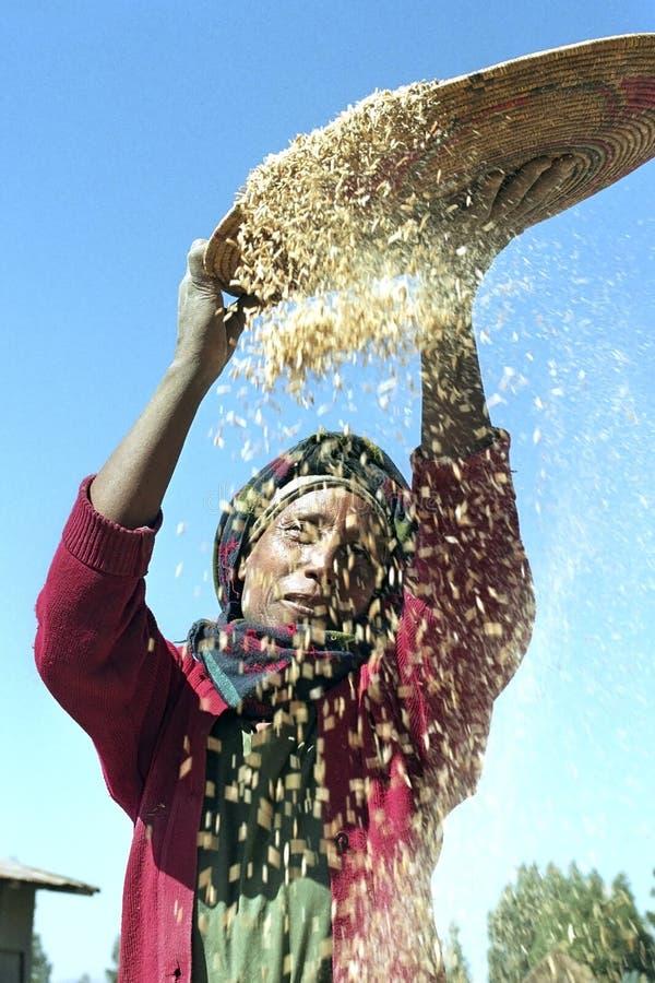 Desperdicio separado de la mujer etíope del grano fotos de archivo