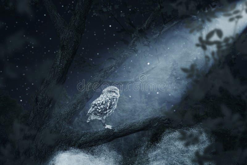 Despertando el búho que se sienta en el árbol iluminado por claro de luna brillante fotografía de archivo