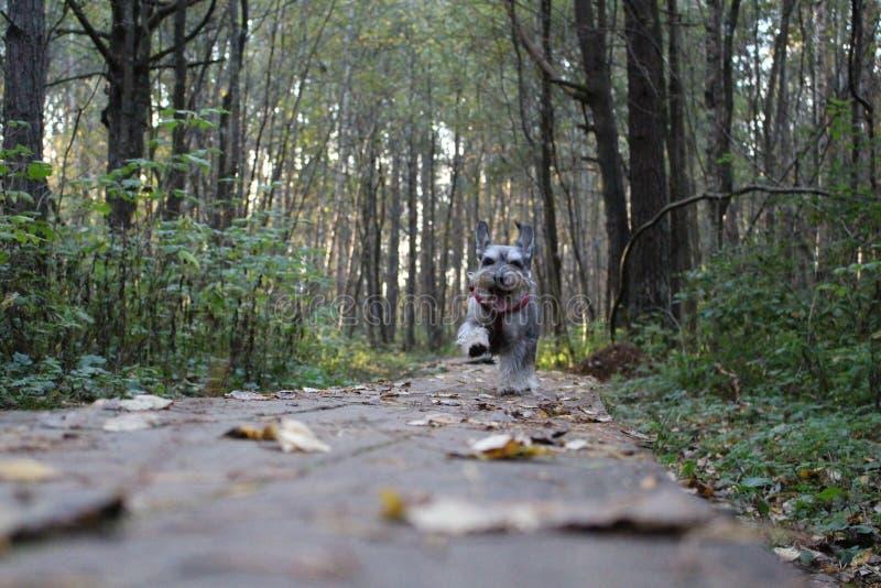 Despertar mi Milo del perro fotografía de archivo libre de regalías